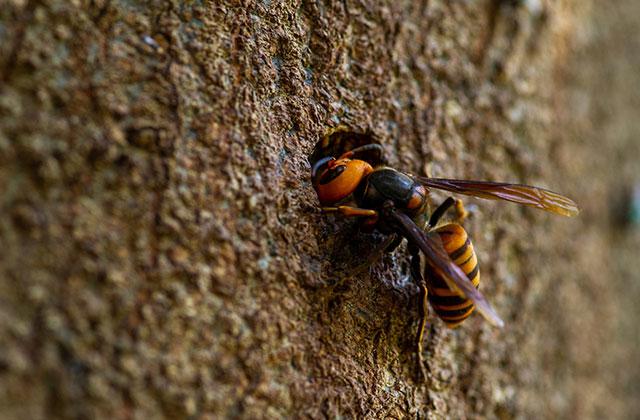 鹿児島市千年で直径18cmの蜂の巣駆除