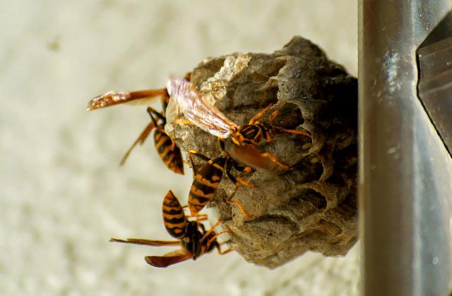 鹿児島市浜町で玄関先にできた蜂の巣駆除