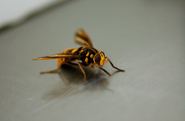 鹿児島市和田で換気口の中にできたスズメバチの巣の駆除