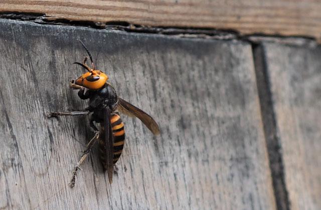 さいたま市南区で車庫にできた蜂の巣駆除