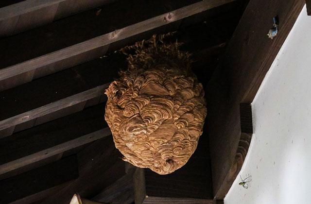 千葉市美浜区で軒下のスズメバチの巣を駆除