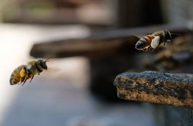 【鹿児島市若葉町】スズメバチ駆除