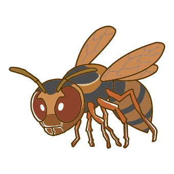 キボシアシナガバチ