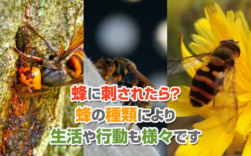 蜂に刺されたら?蜂の種類により生活や行動も様々です