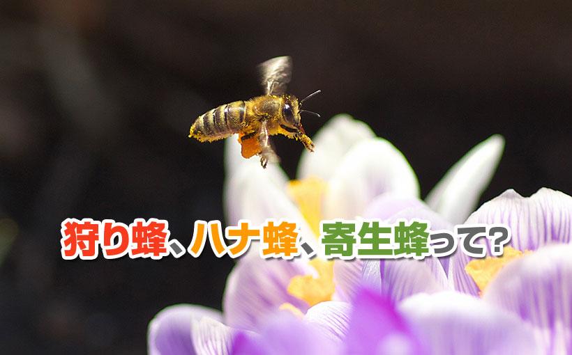 狩り蜂、ハナ蜂、寄生蜂って?
