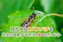 超危険なスズメバチを安全に駆除する方法3つのポイント