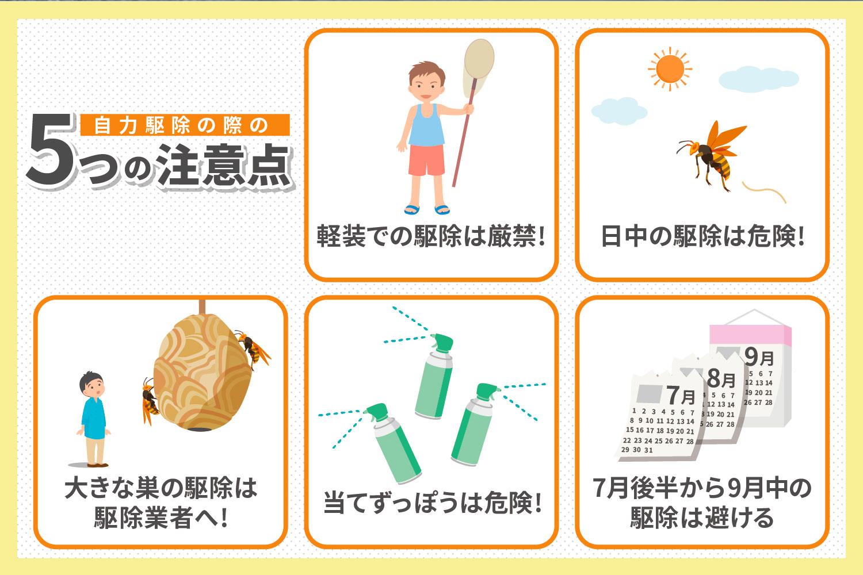 自力でスズメバチを駆除する際の5つの注意点