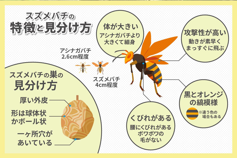 スズメバチの特性や見分け方・そのほか注意点
