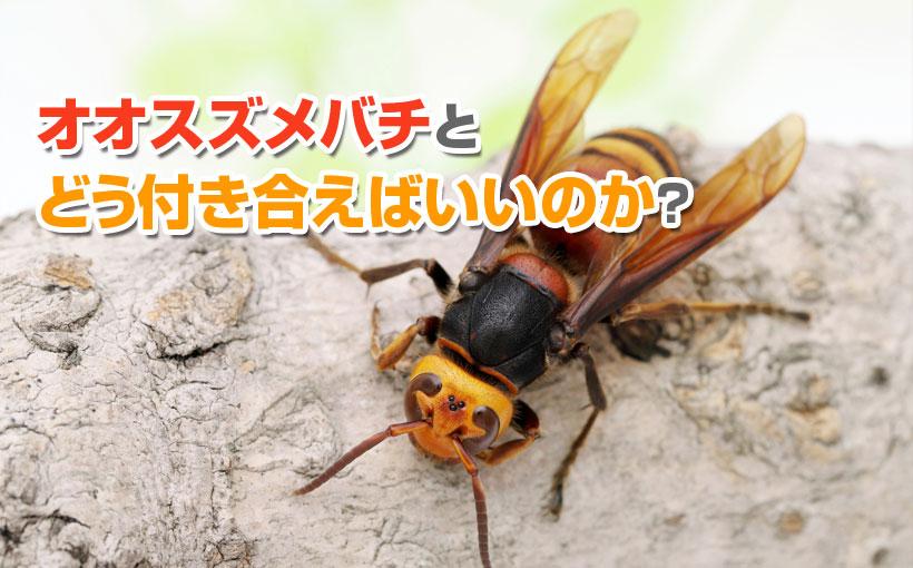 病院 蜂 べき 行く 刺され に た 蜂に刺されたらどうすればいい?応急処置や受診先が知りたい。