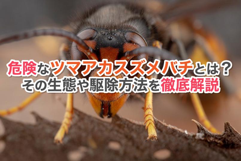 危険なツマアカスズメバチとは?その生態や駆除方法を徹底解説