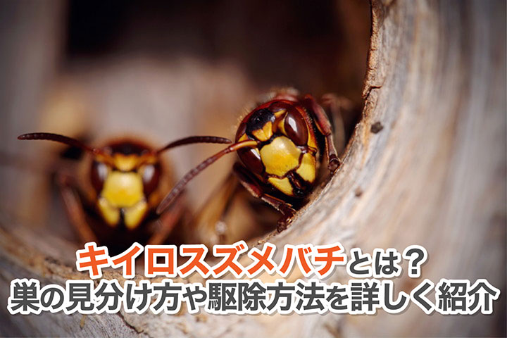 キイロスズメバチとは?巣の見分け方や駆除方法を詳しく紹介