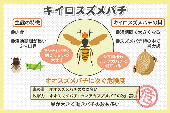 知っておこう、キイロスズメバチの生態・危険性・巣の特徴