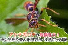 アシナガバチは危険性大!その生態や巣の駆除方法・注意点を解説