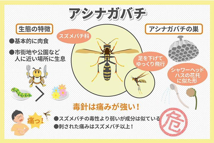 知っておこう、アシナガバチの生態・危険性・巣の特徴