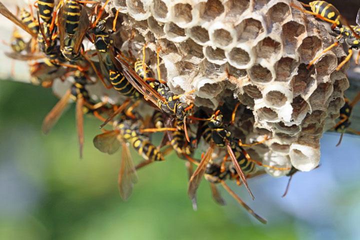 2.巣のサイズが10cm程度かどうか確認しよう