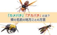「カメバチ」「アカバチ」とは?蜂の名前の地方ごとの方言