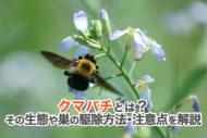 クマバチとは?その生態や巣の駆除方法・注意点を解説