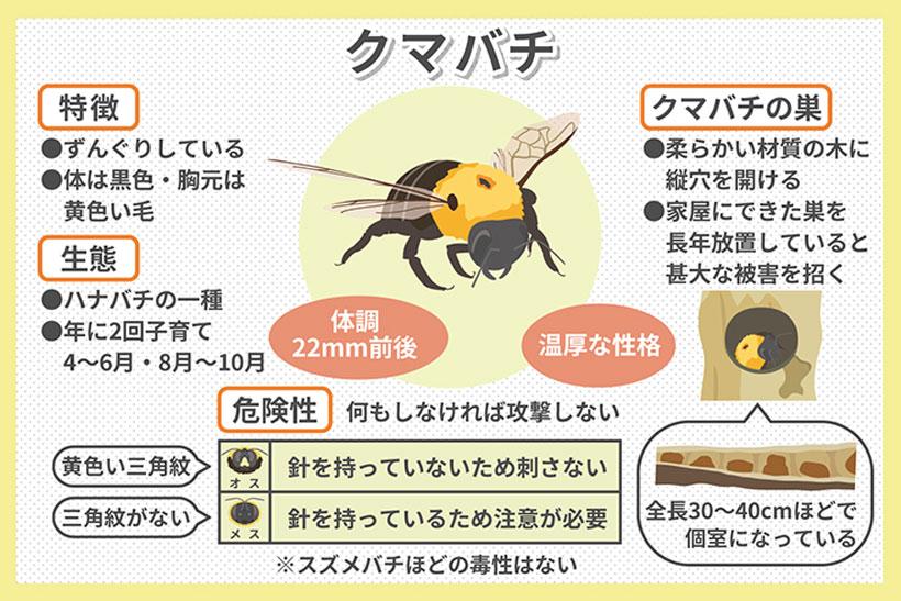 クマバチとは?