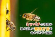 ミツバチの特徴や巣の正しい駆除方法を分かりやすく解説