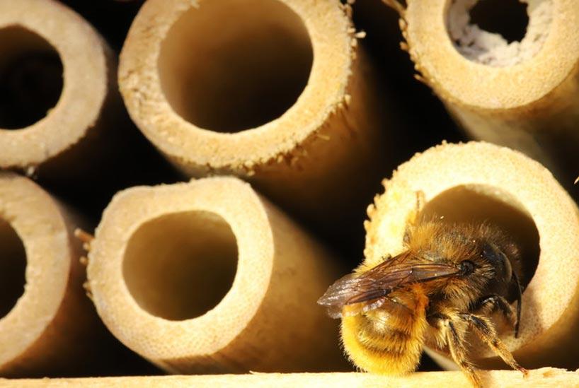 ミツバチが巣を作りやすい場所