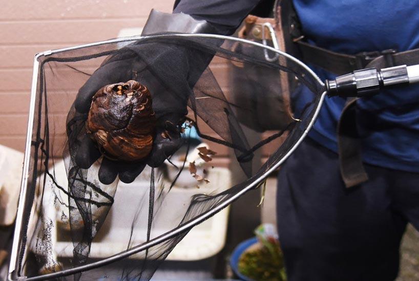 ミツバチの巣の正しい駆除方法
