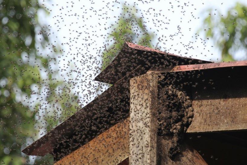 ミツバチの巣を自分で駆除するのは危険?